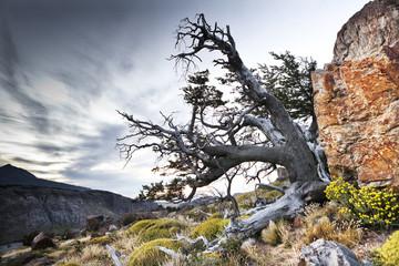 alba con albero nel parco de el chalten, argentina, patagonia