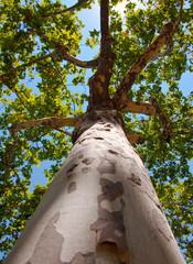 Tree in Ciutadella Park. Barcelona.