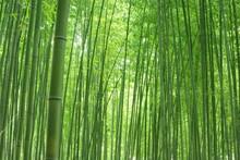 緑色の竹林
