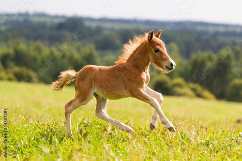 Fototapeten,natur,tier,pferd,hengst