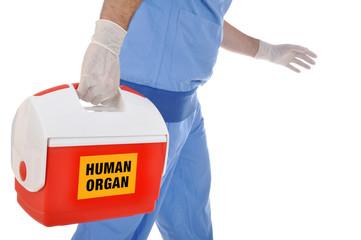 Organspende in Kühlbox