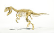 Allosaurus skeleton photo-realistic, scientifically correct.