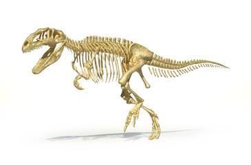 Gigantosaurus dinosaurus full photo-realistic skeleton, scientif