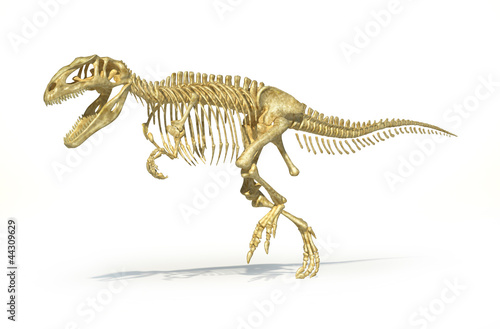 Gigantosaurus dinosaurus full photo-realistic skeleton, scientif