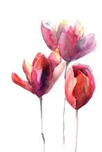 kwiaty tulipanów