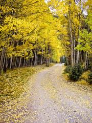Journey through the aspens in Fall Colorado USA