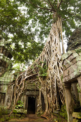 Ancient Ta Prohm Temple, Cambodia