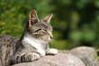 Kätzchen träge in der Mittagssonne