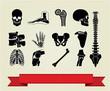 Anatomy icons set 2