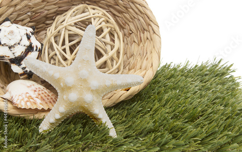 seashells in basket on grass