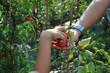 Bambino raccoglie pomodori biologici dalla mano della mamma