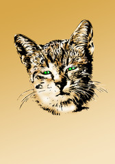 Fun cat portrait drawing art