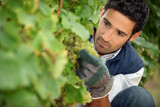 man working in a vineyard