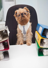 Dog accountant