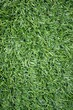 texture of turf