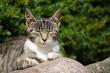 Katze träge in der Sonne