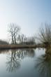Dutch Biesbosch