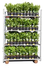 Pflanzencontainer
