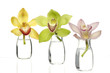 Three colorful orchid in glass vase