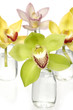 Colorful orchids in small glass vases