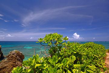 サンゴ礁の海と亜熱帯植物