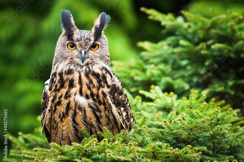 Poster Uil Eagle Owl