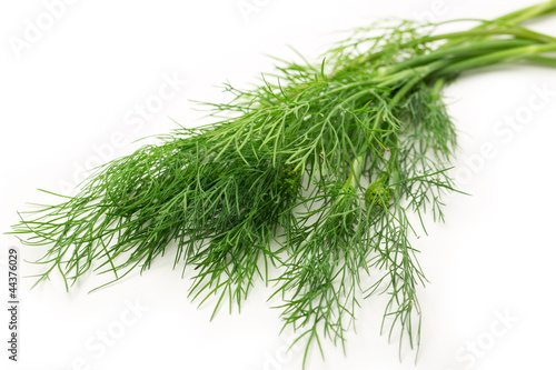 Fresh green dill on white