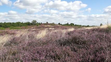 Bretziner Heide im Wind