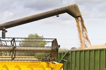 Combine harvester offloading grain