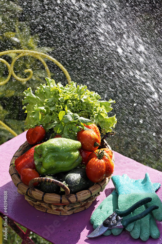 vegetables and water jet
