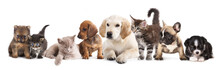 "Постер, картина, фотообои ""Cat and dog"""