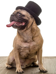 Dog in a Top Hat