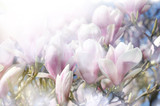magnolia spring floral background