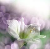 lily and sun light bokeh