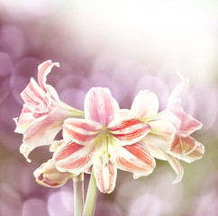 lily and bokeh