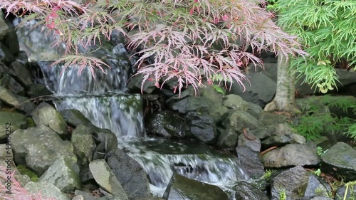 Waterfall with Laced Leaf Maple Trees in Zen Garden