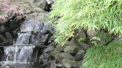 Waterfall with Maple Trees and Ferns in Zen Garden