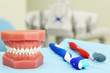 Artificial jaw, tooth brush and dental tool are on table