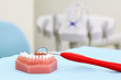 Artificial jaw and red dental mirror are on table in clinic