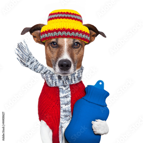 canvas print picture winter dog scarf and hat