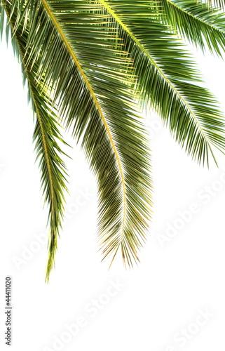 Papiers peints Palmier Palm leaves on white background.