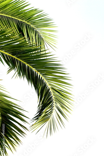 Papiers peints Palmier Palm leaves isolated on white background