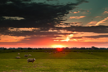 sheep on field against sun