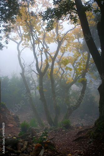 Foto op Canvas Bos in mist Fog in a forest