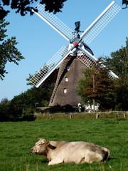 Mühle 7