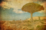 Vintage image of Dragon trees at Dixam plateau, Socotra Island, - 44425605