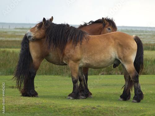 Juister Pferde 8