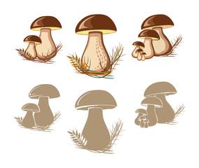 Cep. Edible mushrooms.