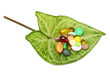 vitamins, tablets and pills on green leaf