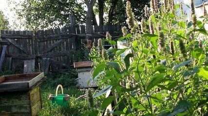 Evening in the apiary